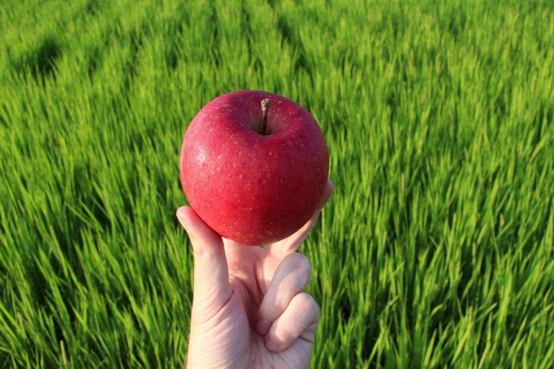 Aomori ist in ganz Japan bekannt für seine Äpfel.