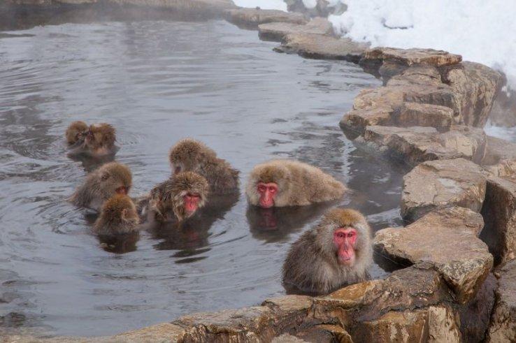 Onsen, die beliebteste Freizeitbeschäftigung der Japaner*innen und eine entspannende Erfahrung für alle!
