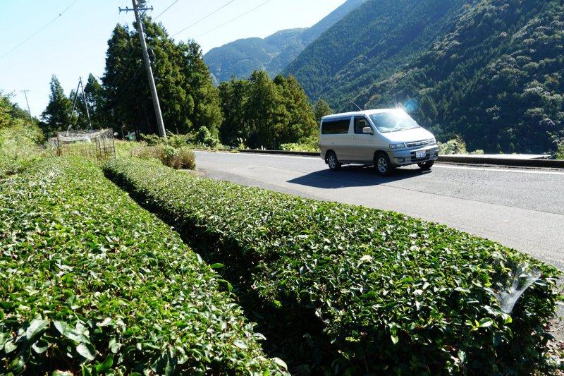 Teeanbaugebiete im Hochland von Fukui lassen sich prima mit einem Camper oder einem Mietauto entdecken.