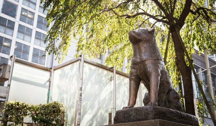 Die Hachiko Statue in Shibuya ist ein beliebter Treffpunkt.