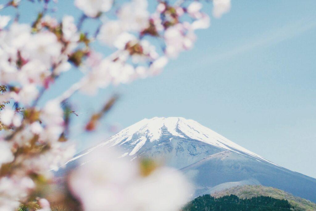 Hanami Sakura Japan