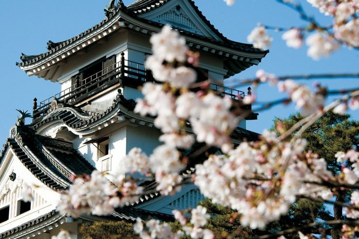 Die Burg Kochi zur Kirschblüte.