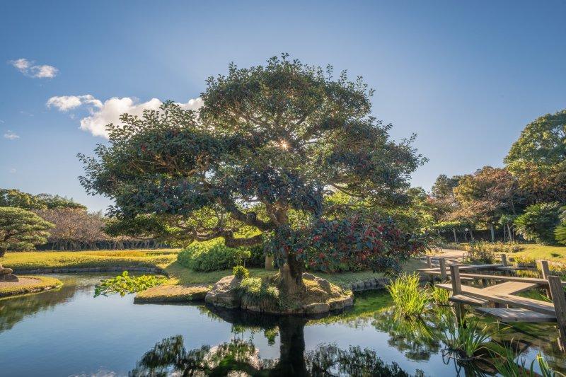 Morgens ist der Korakuen Garten besonders schön.