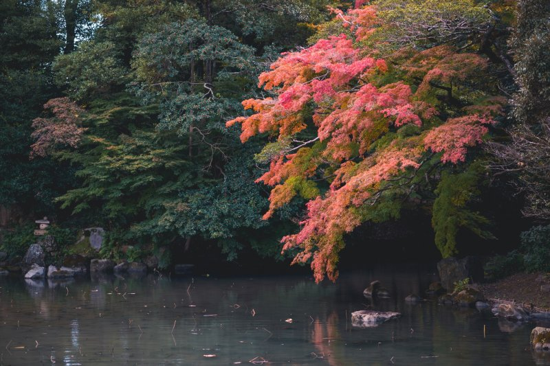 Herbstlaub im Korakuen.