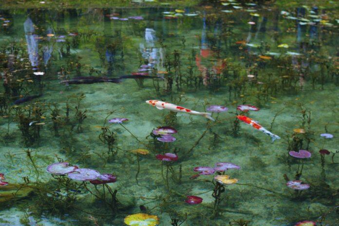 Monet Teich in Seki, Gifu.