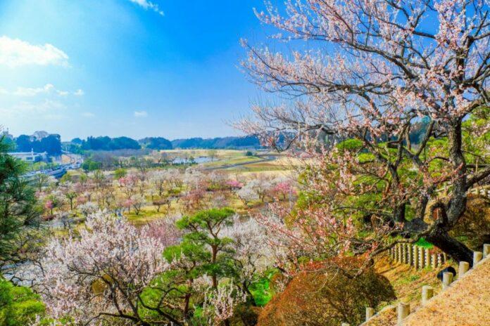 Kairakuen Garten in Ibaraki.
