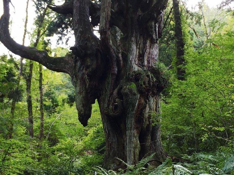 Die Oki Inseln gehören zur Präfektur Shimane und bietet unberührte Natur.