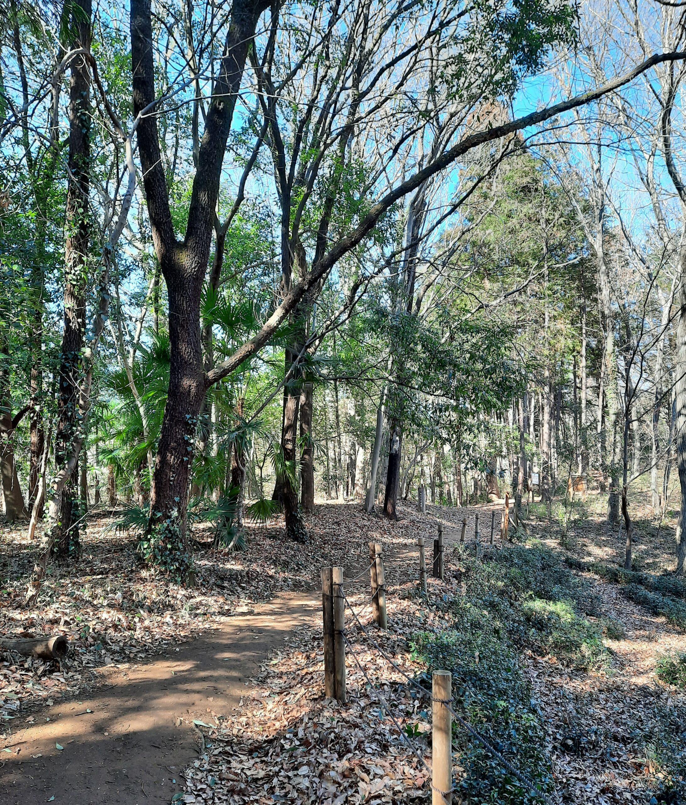 Frühjahrs-Spaziergang im Tototo Wald