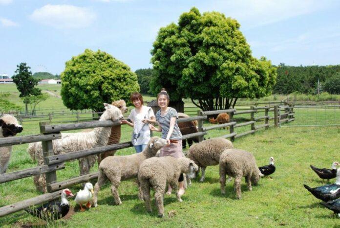Die Mother Farm in Chiba bietet Einblicke ins Landleben.