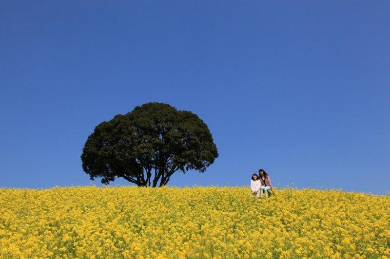 Die ländliche Seite von Chiba.