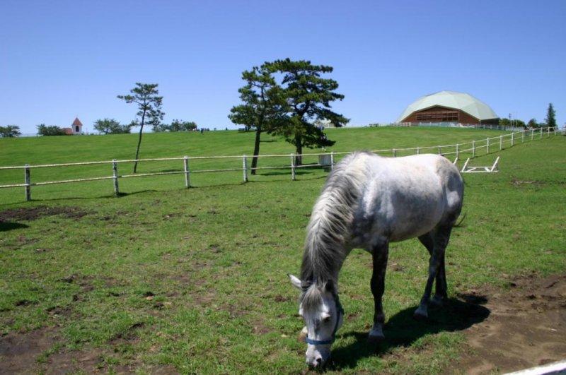 Auch Pferde findet man auf der Mother Farm in Chiba.