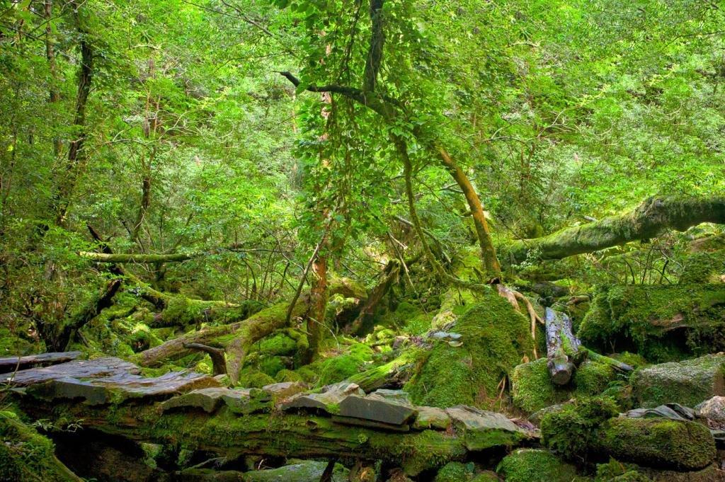 Teile der Wanderpfade in der Shiratani Unsuikyo Schlucht sind durchaus anspruchsvoll.