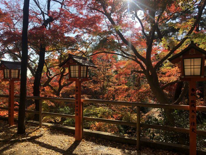 Das Todoroki Tal in Tokyo bietet prachtvolles Herbstlaub.